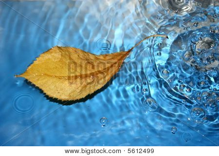 Leaf on clear blue ripples