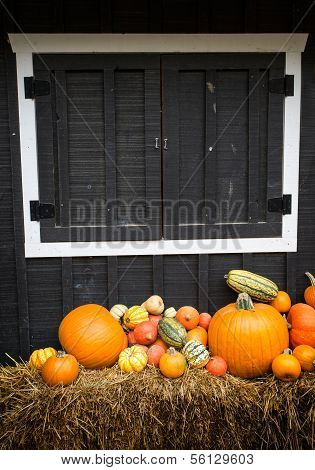 Pumpkins and Squash with barn background