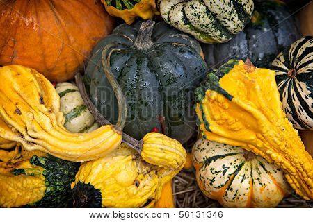Gourd Background