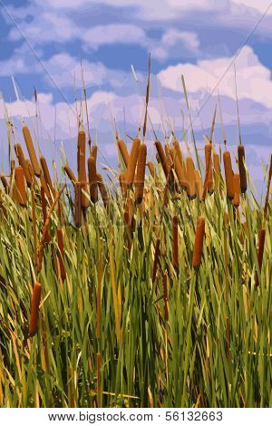 Vector Image Of Cattails (typha Orientalis)