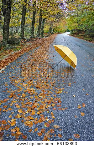 Colorful Autumn Trees And Umbrella On A Winding Country Road
