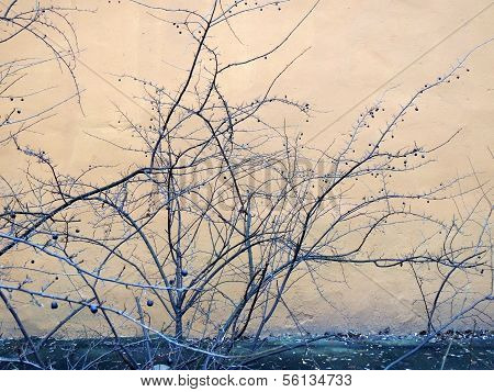 Leafless trees on a background of a wall