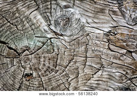 Aged Wood With Knots
