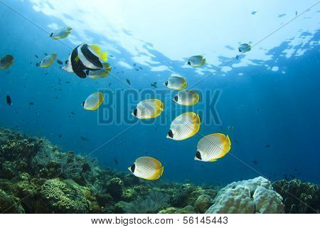 Underwater Coral Reef with Butterflyfish and Bannerfish