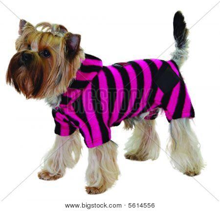 Dog Striped Black-pink Suit