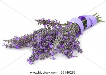 Bunch of fresh-cut lavender tied with mauve ribbon, isolated on white background.
