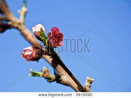 pink flower blue sky