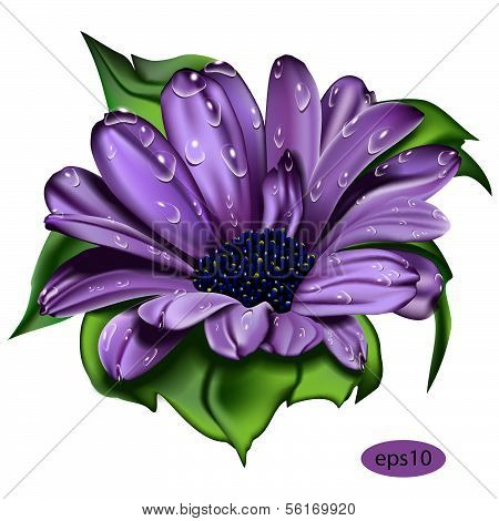 beautiful violet  flower