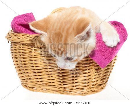 Ginger Kitten In Basket
