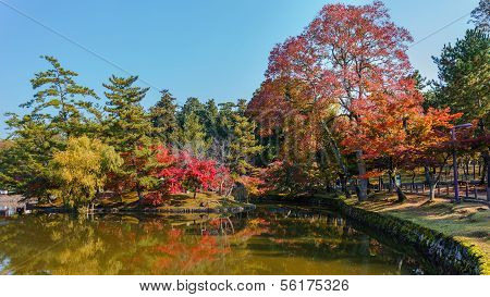 Autumn Laves In A Garden In Front Of Todaiji Temple In Nara