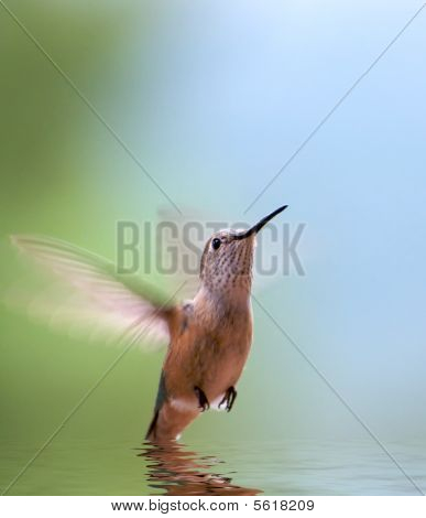 Hummingbird Reflection
