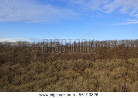 Hillside Woodland