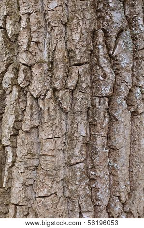 Wooden Rind Texture