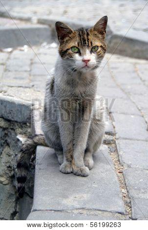 Stray Cat Sit On A Cobblestone Street