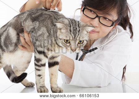 Female  Veterinarian Doing Checkup A Cute Cat At Clinic