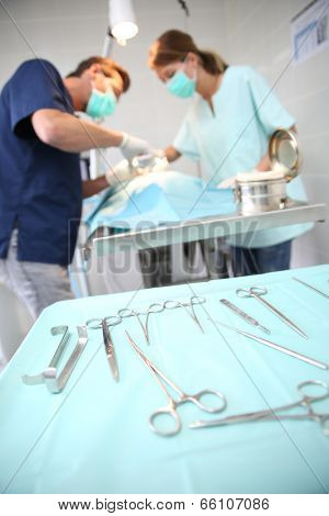 Veterinarian and assistant working in surgery room