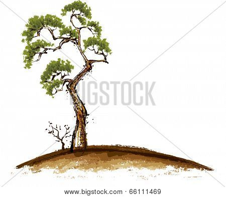 A lonely old pinetree stands on the hill