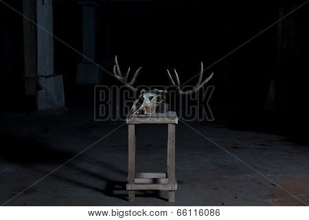 Deer skull on a stand in a dark basement