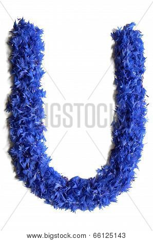 Letter U Made Of Flowers (cornflowers) Isolated On White Background