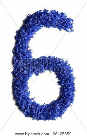 Number 6 Made Of Flowers (cornflowers) Isolated On White Background