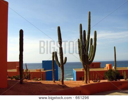 cactuscabo