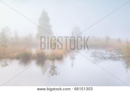 Old Swamp In Dense Morning Fog