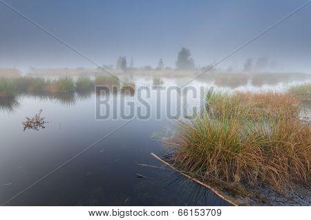 Misty Morning On Wild Lake