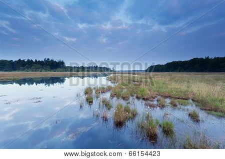 Early Sunrise Over Swamp In Forest