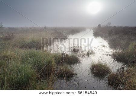 Foggy Sunrise Over Swamp