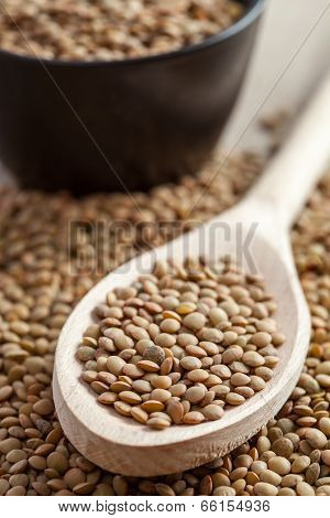 Spoon Full Of Lentils