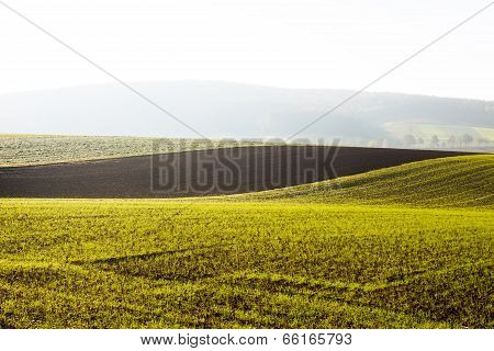 Arable Land In Morning Sunlight