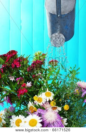 Water can watering flowers on wooden background