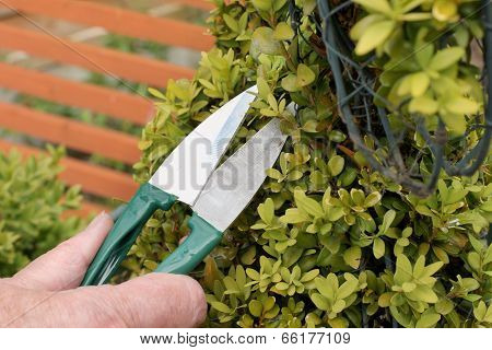 Topiary Clipping