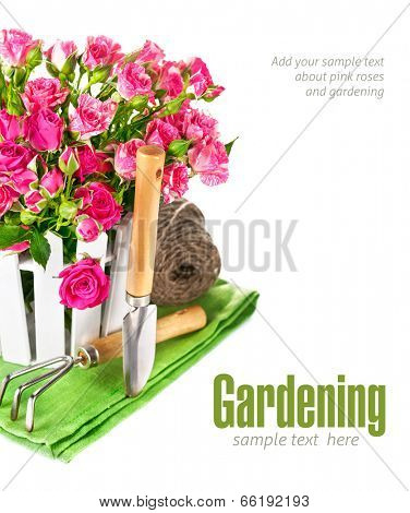 Pink roses with garden tools. Isolated on white background