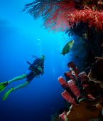 picture of bottomless  - Scuba diver exploring tropical reef wall on the depth - JPG