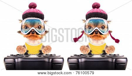 dog  dressed as skier play on game pad