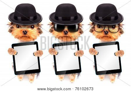 Dog dressed as mafia gangster with tablet pc