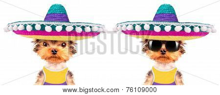 dog wearing a mexican hat