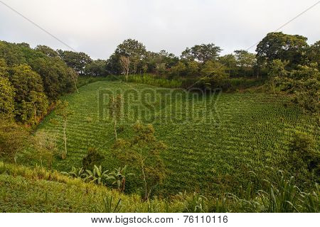 Rural Frijoles Field From North Of Nicaragua