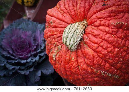 Orange Pumpkin, Purple Kale