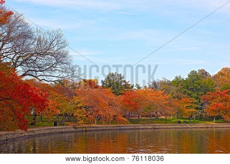 Fall at Tidal Basin Washington DC.