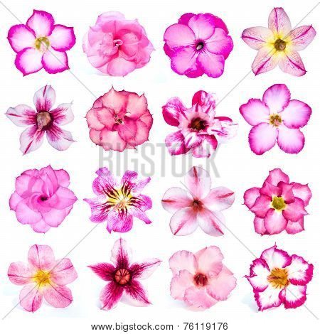 Collection Of Pink Flowers Isolated On White Background.