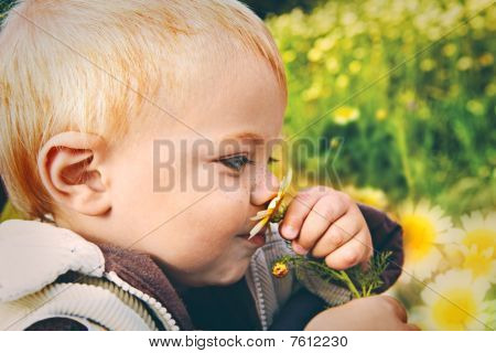 Small Baby Smelling Daisy
