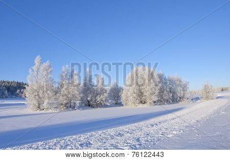 Winter, snow, tracks and frost in the trees.
