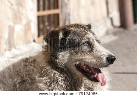 Street adult mixed breed dog