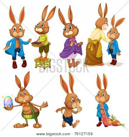 Set of bunny rabbits on white