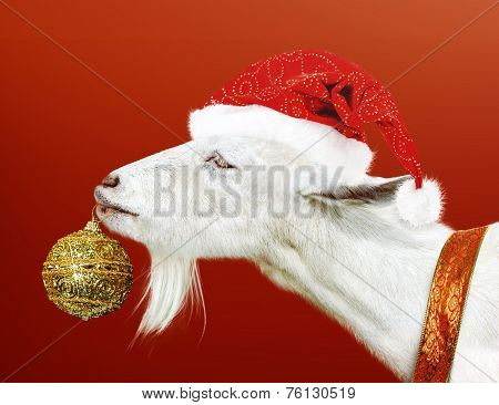 White Goat Holding Golden Christmas Toy