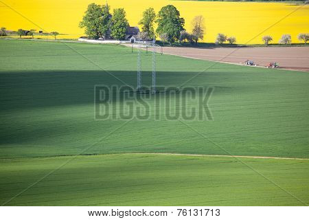 Field Of Rapeseeds