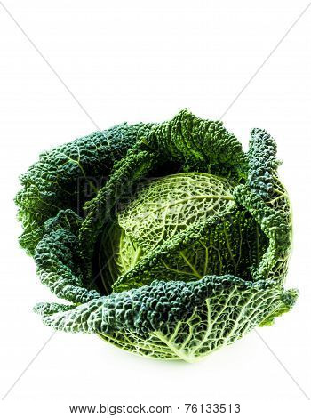 Savoy Cabbage On The White Background