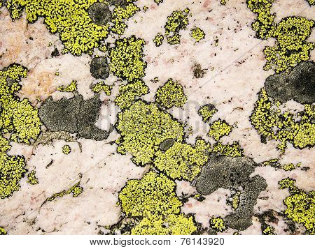 Lichen And Rose Quartz Abstract